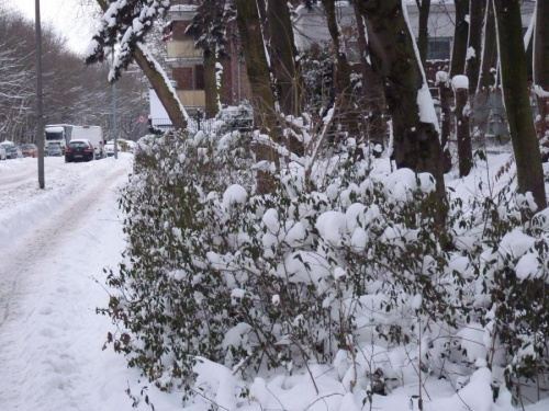 winter_09.jpg